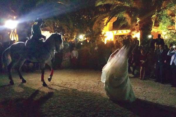 Dancing_horse_5